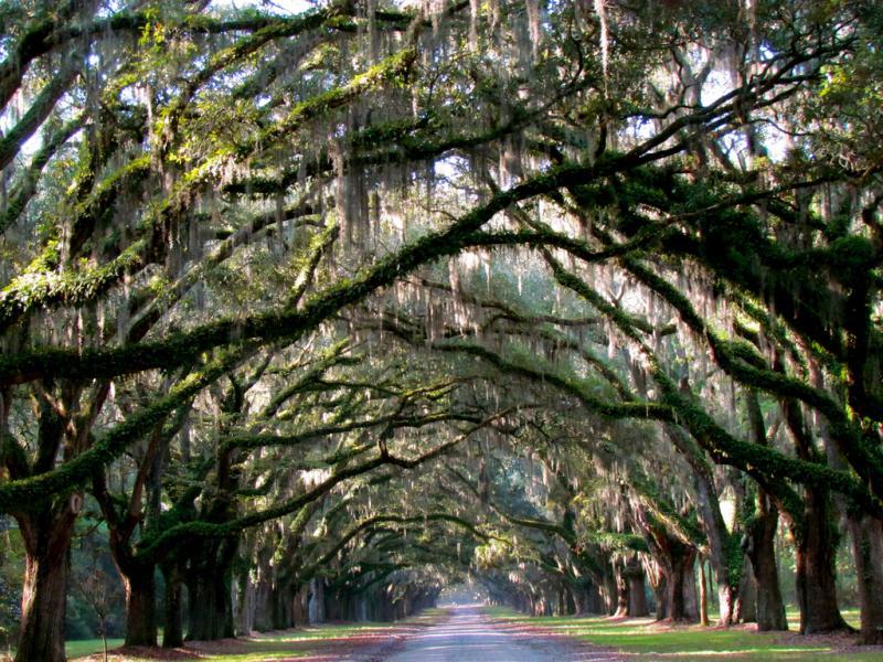 Savannah Georgia Car Rental Cities